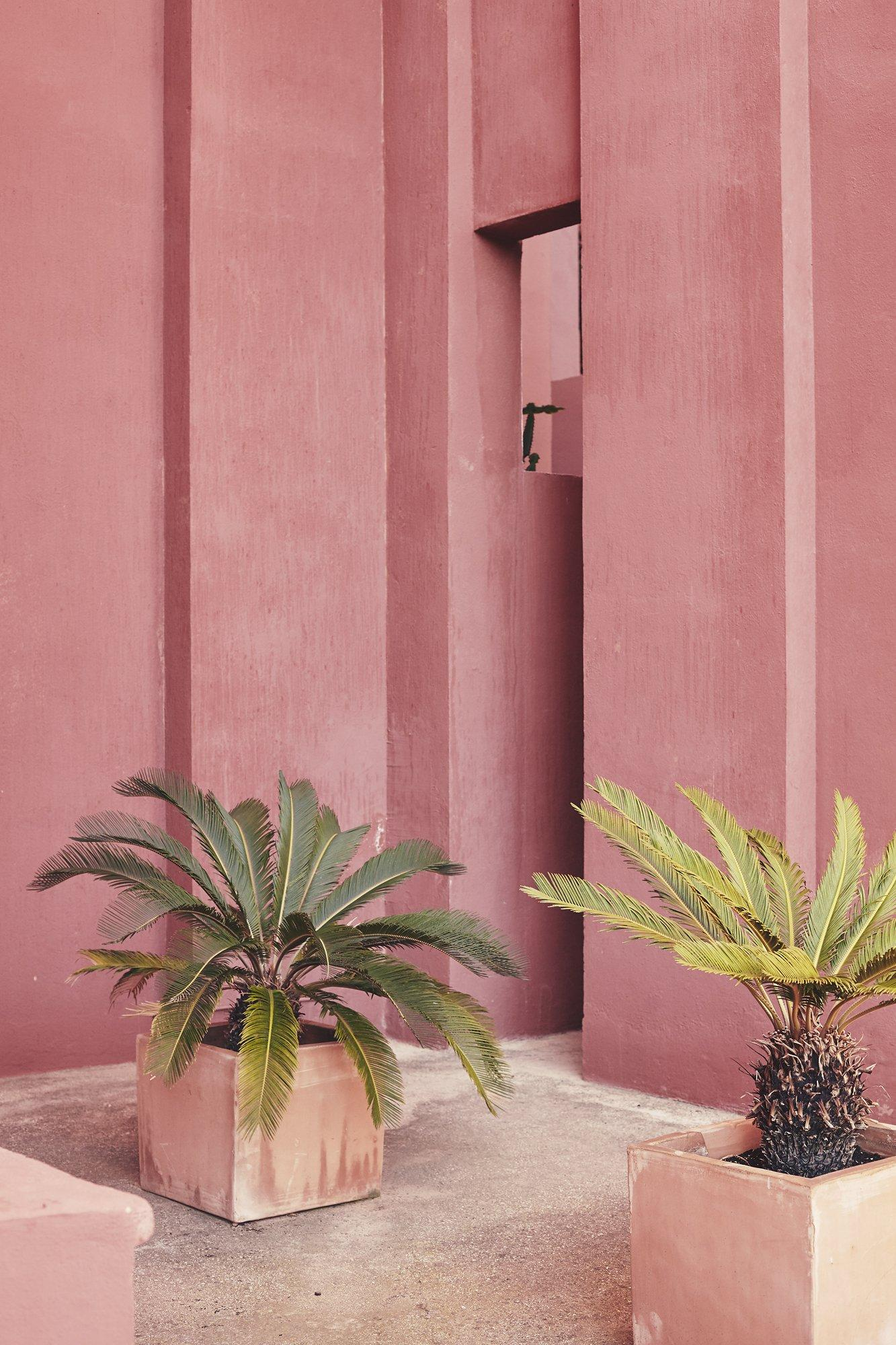 Pink Terra Cotta Design